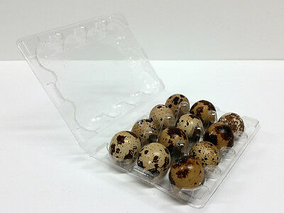 Quail Egg Cartons - 100pcs - FREE SHIPPING!