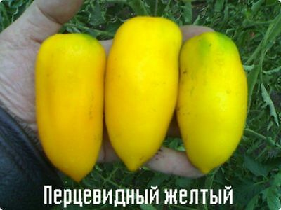Tomato Seeds *Pertsevidny gold (pepper)* Ukraine Heirloom Vegetable Seeds