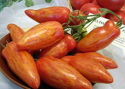 Tomato Seeds *Pertsevidny striped (pepper)* Ukraine Heirloom Vegetable Seeds