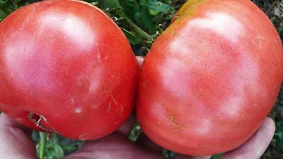 Tomato Seeds *Chinese Giant* Ukraine Heirloom Vegetable Seeds