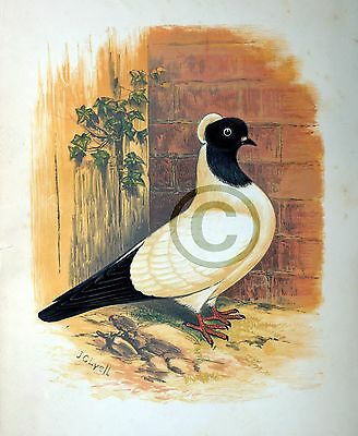 pigeon bird art  poster gift  modern folk 13x19 mail delivery GLOSSY PRINT
