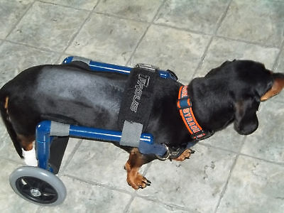 Dog Wheelchairs/ Light Weight. Comes ready to Roll!