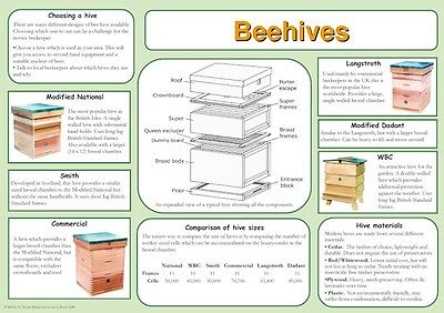 Beekeeping Posters, set of 9, includes feeding, hives, disease, swarm, dance