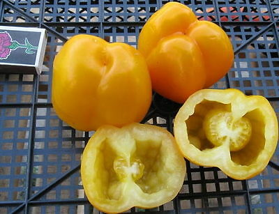 Tomato Seeds White, Hollow Ukraine Heirloom Vegetable Seeds/Perfect for stuffing