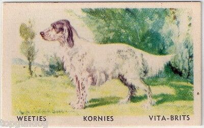 English Setter Dog Australian Cereal Card 1949