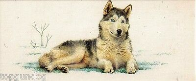 Siberian Husky Dog Rare Brazilian Nestle Chocolate Card 1992