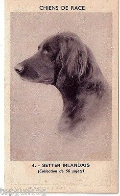 Rare Irish Red Setter Dog French Pharmacuetical Advert Card 1930s