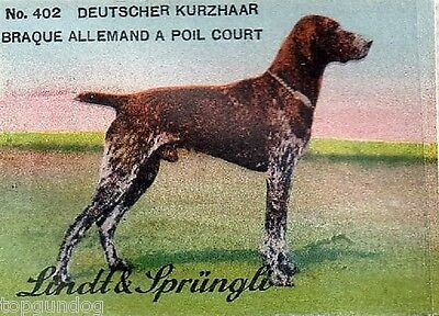 Rare German Shorthaired Pointer Dog Swiss Chocolate Stamp/Card c1930s