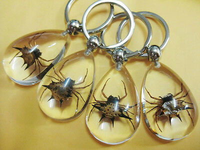 8Pcs Cool Nice Real Insect Golden Spider Clear Drop Style Key-Chains
