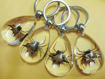 12PC SUPER INSECT REAL INSECT GOLDEN SPIDER CLEAR DROP STYLE KEY-CHAINS bw001