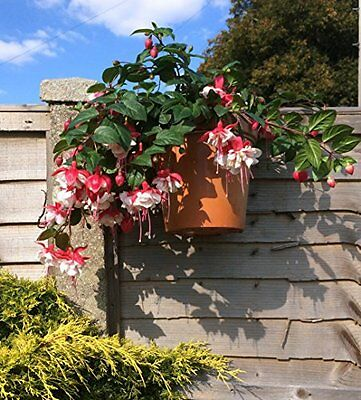 """Fence Hooks, 6 plant pot hangers to hang 6"""" pots on fences........ Ideal for big"""