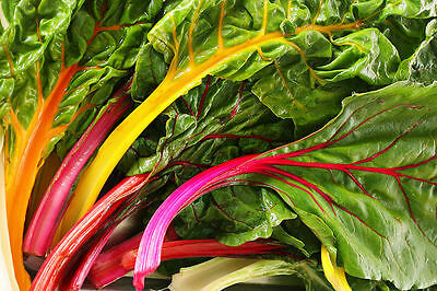 Swiss Chard seeds Rainbow Ukraine Heirloom Vegetable Seeds