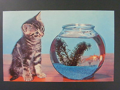 Cute Kitten Staring At Fish Bowl Vintage Color Chrome Postcard 1950s