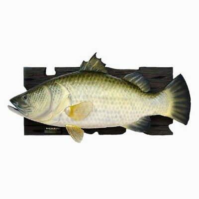 Baramundi Fish Wall Plaque