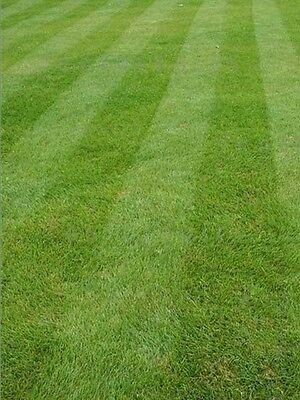 Luxury Grass Seed Fine Front Lawn Seed Pristine Rye Free Certified Seeds