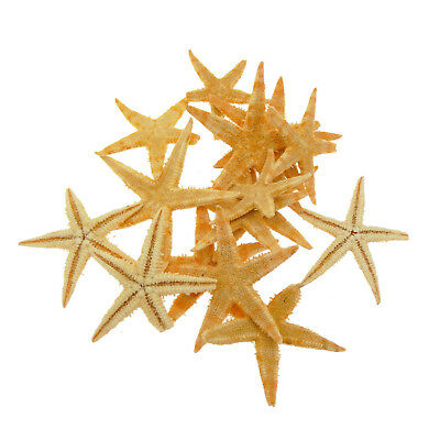20pcs Small Real Starfish 3cm-5cm Sea Star Seashells Crafts Decorations