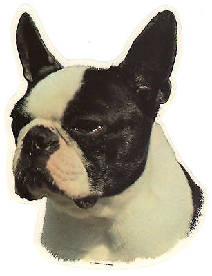 Boston Terrier Decal Sticker Dog Breed Transparent UV Resistant for Glass