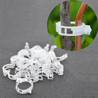 20 Pcs Clips Stem Fix Garden Accessories Fastener Loops Plant Flower Vegetable