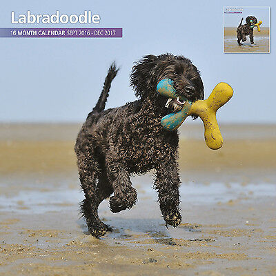 Labradoodle - 2017 16 Month Traditional Wall Calendar