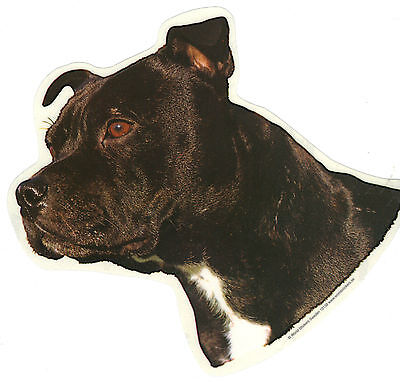 English Staffordshire Bull Terrier Decal Sticker Dog Breed Transparent