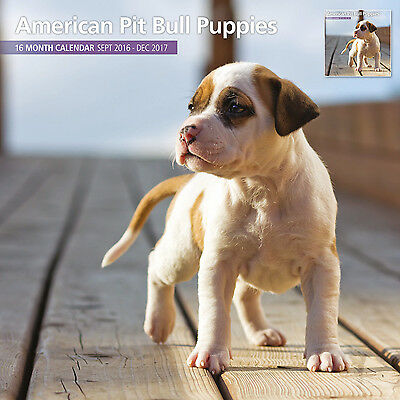 American Pit Bull Terrier Puppies - 2017 16 Month Traditional Wall Calendar