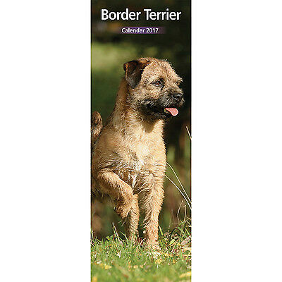 Border Terrier - 2017 Slim Calendar