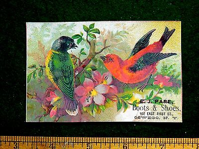 1870s-80s Lovely Colorful Birds Flowers E J Pare Boots & Shoes Trade Card #1 F28