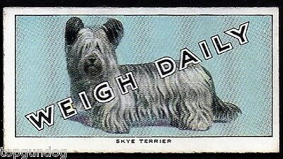 Skye Terrier Dog Weigh Daily Trade Card 1953