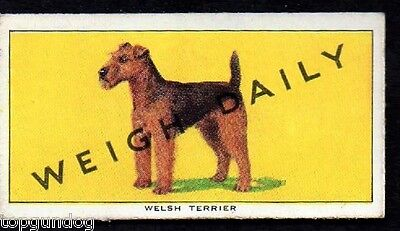 Welsh Terrier Dog Weigh Daily Trade Card 1953