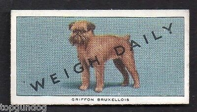 Griffon Bruxellois Brussels Weigh Daily Trade Card 1953
