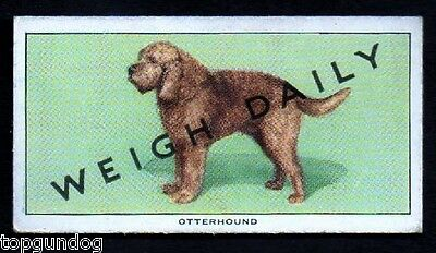 Otterhound Dog Weigh Daily Trade Card 1953