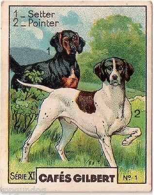 Rare Gordon Setter & English Pointer Dog French Coffee Card c1930s