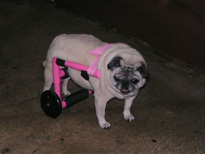 Dog Wheelchair/Comes Ready To Go! Great For Pugs!!