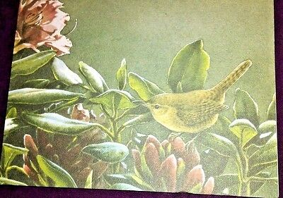 House Wren in midst of Pink Flowers-C. McClung-Blank Greeting Card -2001