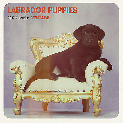 Labrador Puppies - 2017 Mini Calendar