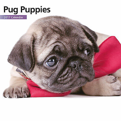 Pug Puppies - 2017 Mini Calendar