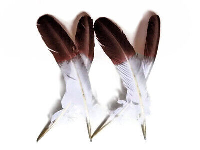 Turkey Feathers | Rounds Imitation Eagle - 6 Pieces, Brown Tipped