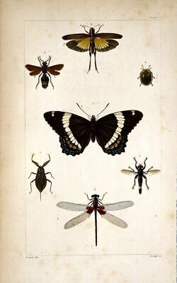 Set of 2 x 19th Century Natural History Prints Butterflies Insects Pictures