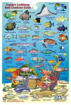 "Franko Caribbean Sea Reef Creatures Guide Laminated Fish ID Card 4"" x 6"""