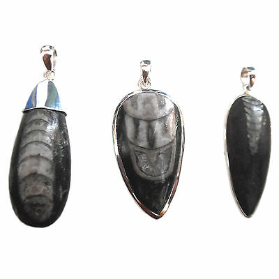 Orthoceras Fossil Sterling Silver Pendant - 3 Choices Available Stunning Gift