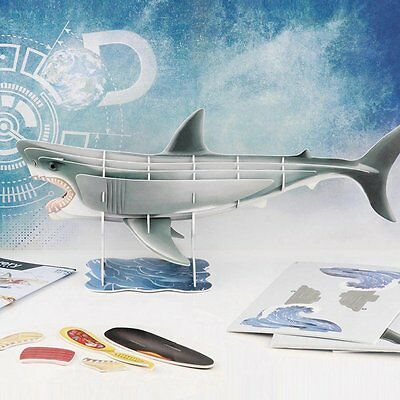 3D Shark Anatomy Model DISCOVERY CHANNEL