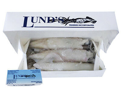 Calamari Squid 1Ib Box x10 - Frozen Sea Bait - Fishing Bait