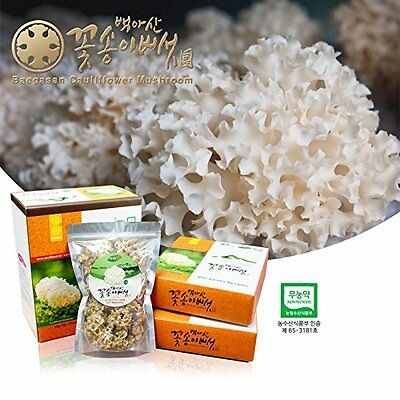 Dried Cauliflower Mushroom Sparassis Crispa Natural Antibiotic Anticancer 100g
