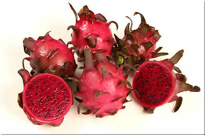 !RARO!Talea dragon fruit varietà RED JAINA pitaya pitahaya pianta frutto no semi