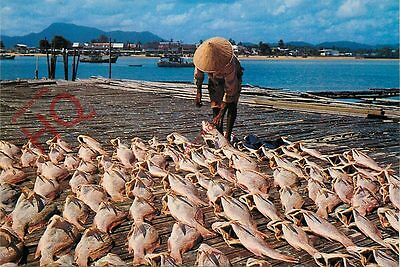 Postcard: Malaysia, Drying Of Salted Fish