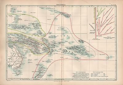 1880 ca ANTIQUE MAP-POLYNESIA, TREE OF RACES,ETHNOLOGICAL DIVISIONS