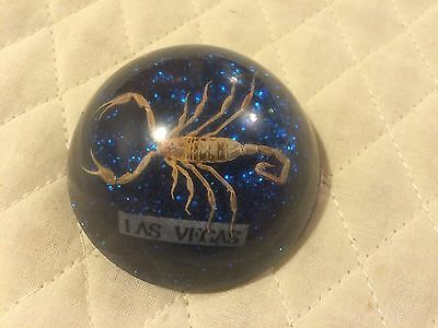 Vtg Acrylic Lucite Paperweight Insect Specimen Real Scorpion Las Vegas NV