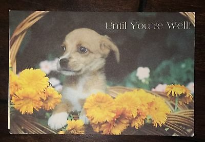 Vtg Puppy Dog Get Well Soon Feel Better Greeting Card Flower Basket Real Photo