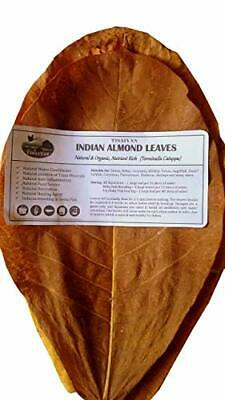 50 Grams A+ Grade Indian Almond Leaf | Catappa Ketapang | Naturally Aged & Dried