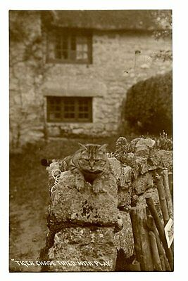 """vintage real photo postcard cute  tabby cat on wall """"Tiger chase tired with play"""